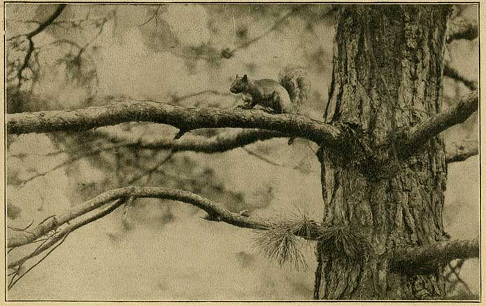Board of Trustees purchase squirrels for campus